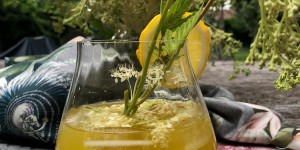 Beitragsbild des Blogbeitrags Oxymel reloaded with Meadowsweet & Ginger